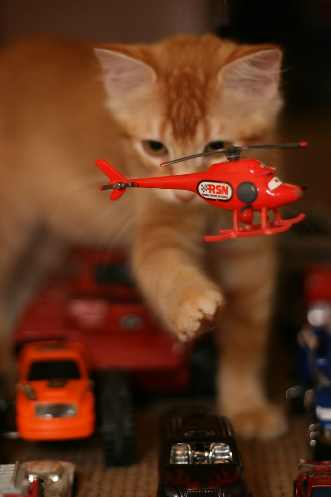 Traffic Attack Cat! Animal Instincts. . .MSH 08/09