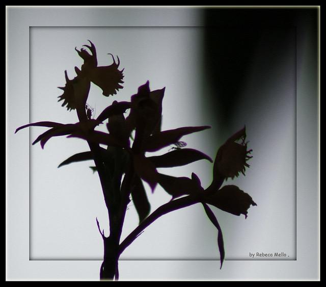 Delicate silhouettes ...