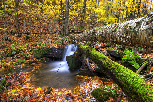 park mountain color fall water creek river state tennessee east explore flowing cascade roan thechallengefactory