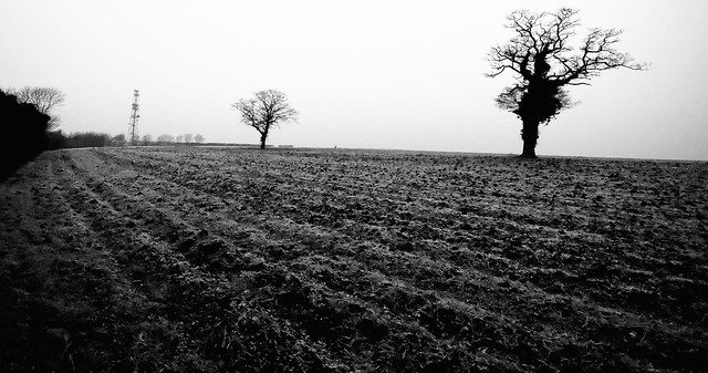 imgp0085 - Frosty Furrows