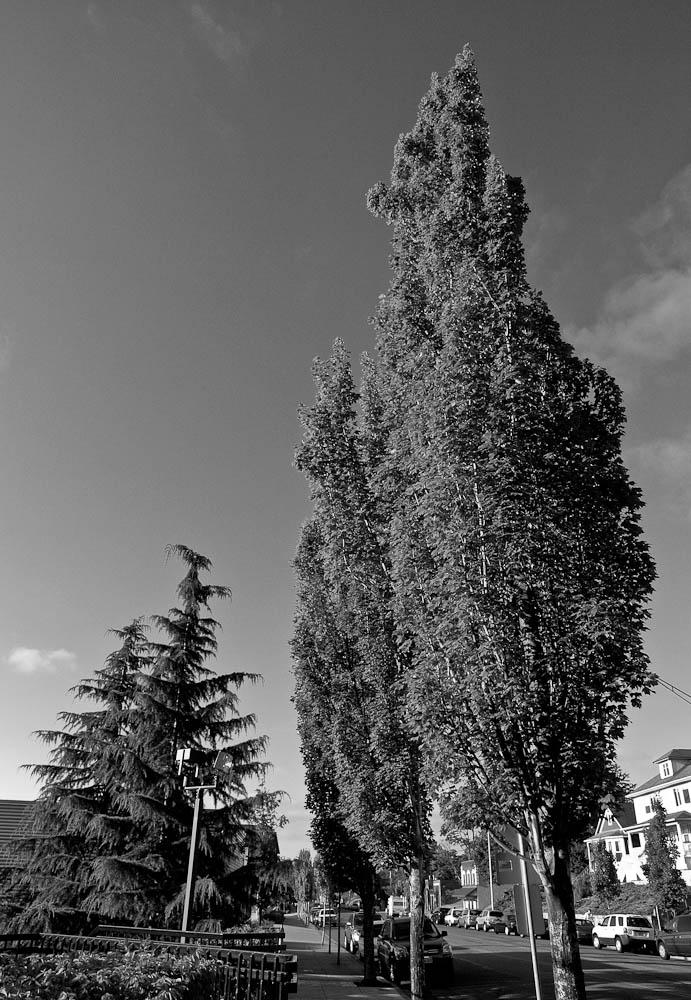 Tacoma2009-004