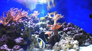The Reef Tank as of 11/14/09 | by Moto@Club4AG