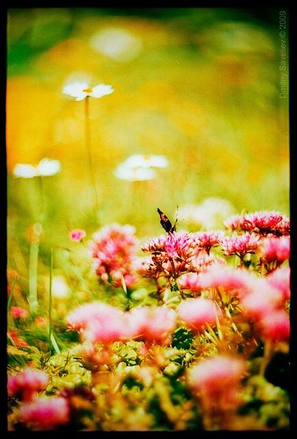 Flowers & butterflies-1