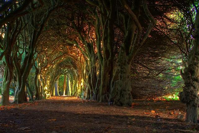 Fairytale tree tunnel.