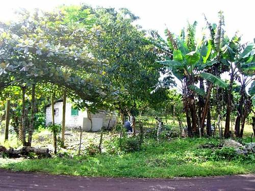 FarmHouse-seen-from-Road Galapagos   by GaryAScott