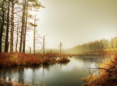autumn mist tree fall water rain fog photoshop canon landscape october day moody rainyday newengland foliage swamp raindrops marsh treetrunks sigma1020mm masonnh newenglandfoliage 40d newhampshirelandscape patrickcampagnone pwfall