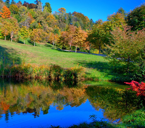 blue sky italy lake colour reflection tree nature italia piemonte biella piedmont italians burcina pollone worldbest holidaysvacanzeurlaub burcinapark parcodellaburcina natureselegantshots capturethefinest