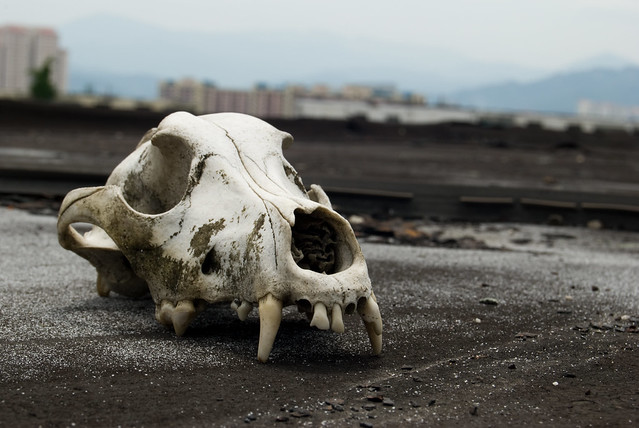 Pekeliling Heights: Dog Skull