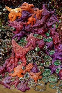 Intertidal life