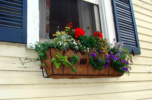 Window box made from coco fiber matting, with flowers | by Martin LaBar