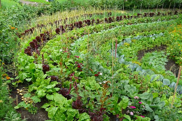 Vegetable Vista