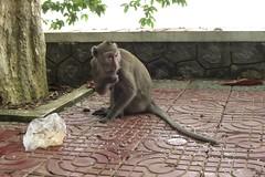 Crazy monkey   by jan-one