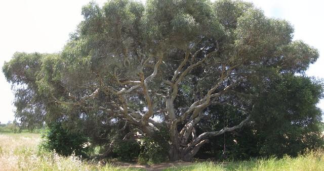 IMG_5170_2 110519 LLC tree with tire swing ICE rm stitch98