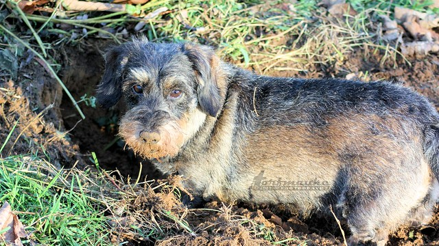 A mud snoot...