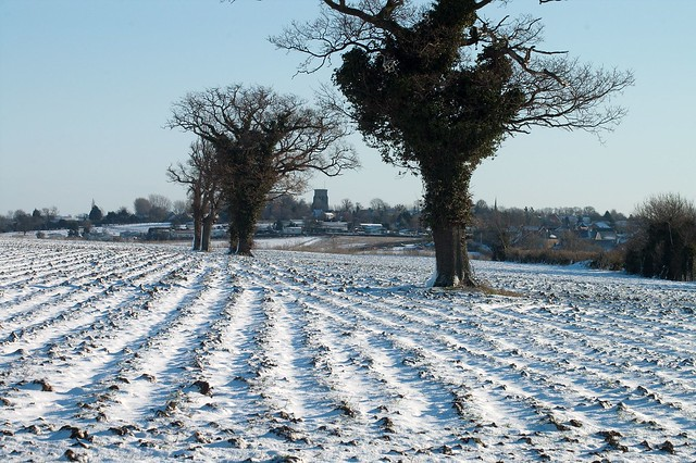 imgp0224 - Snowy Furrows