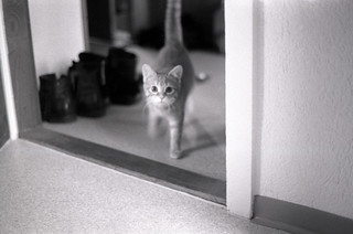 my very first picture ... with the Minolta X-700 | by sogesehen.
