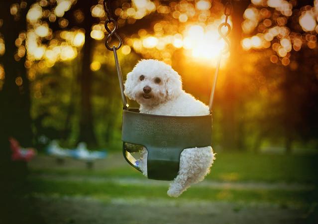bella sunset *explore*