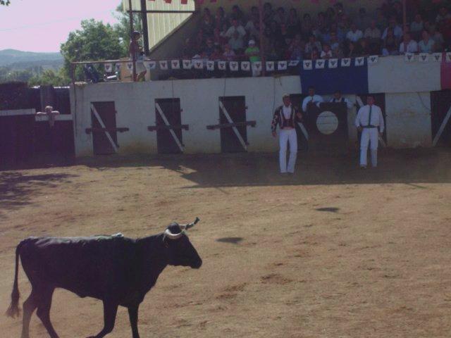 course landaise a sarragachies  vache sans corde
