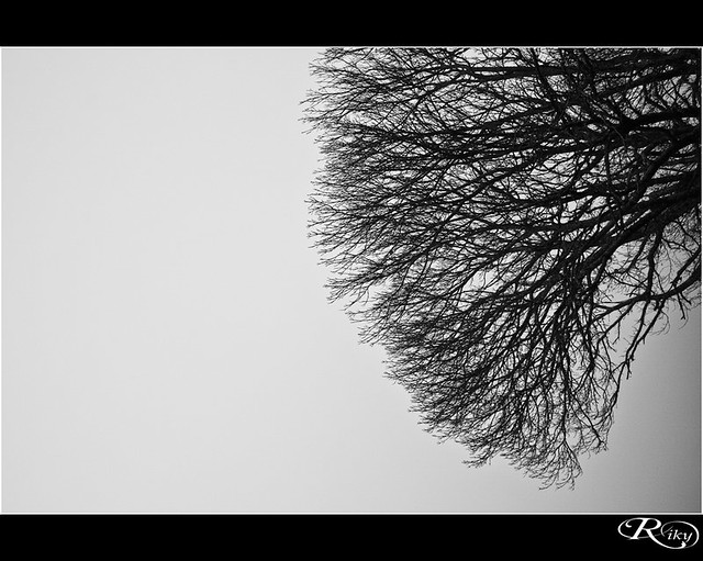 Niebla - Fog