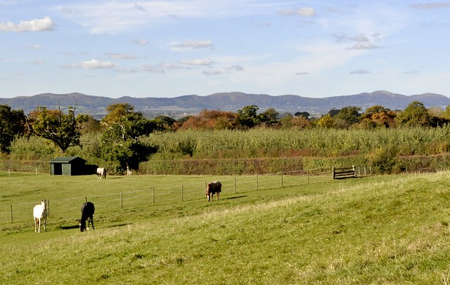 Pastoral scene overlooking the Malvern Hills