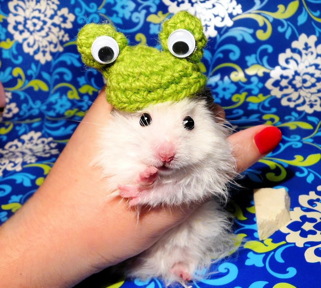 """""""I am Frog?"""" ~ Juniorek"""