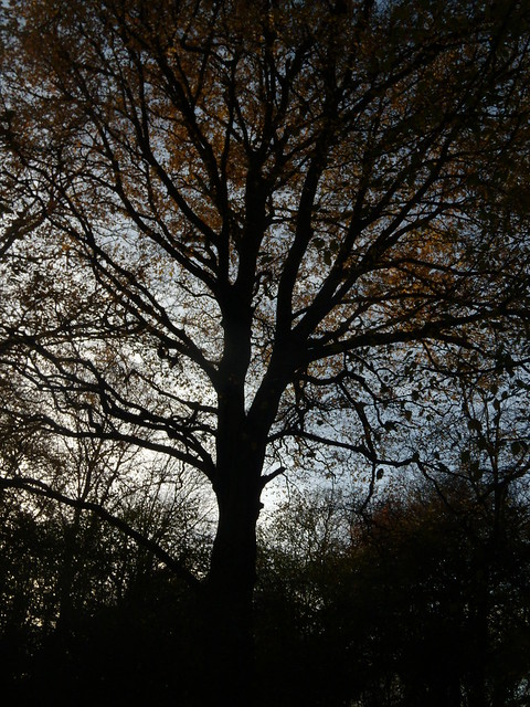 Silhouette tree 2 Knockholt Circular