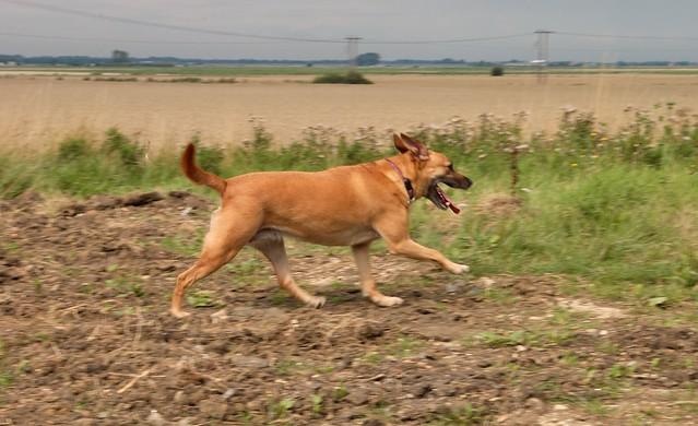 imgp9291 - Millie Running