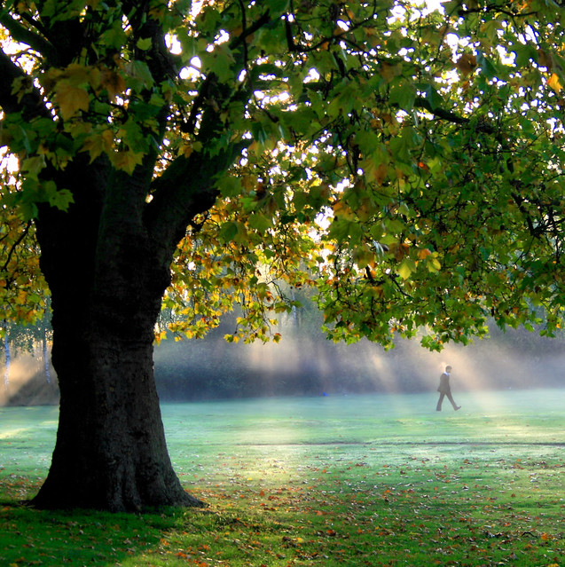 Off to School in the Mist 2