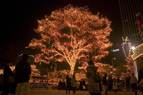 불나무 | by ~Mers