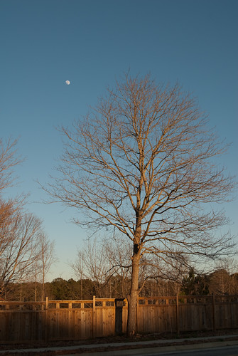 Day 80: Tree and Moon | by KenWorley
