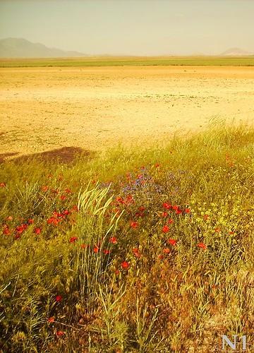 nature natur konya yolu çiçekler doğa gelincikler