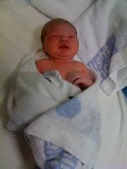 Baby G, a few minutes old | by SomeRandomNerd