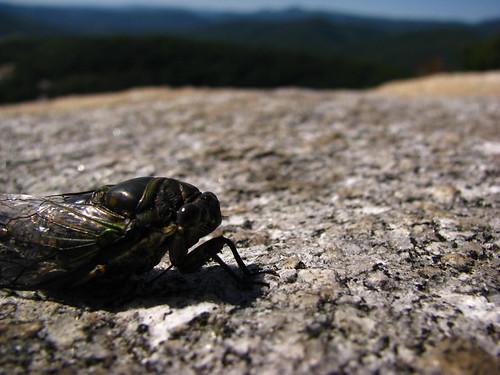 cicada nc hiking trail monolith blueridgemountains stonemountainstatepark roaringgap