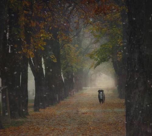 fog and gloom