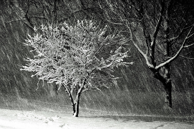 Real Snow Began After Dark >> The Real Snow Began After Dark As The Blizzard Picked Up M Flickr