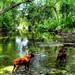 Boxers in Brushy Creek