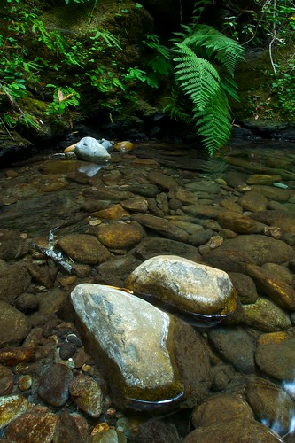 water creek rocks redwoods