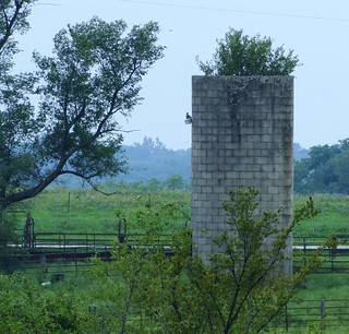 Silo with tree in rain