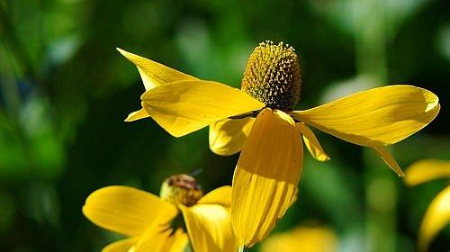 Wien - Taborstrasse - Blumen im Wind