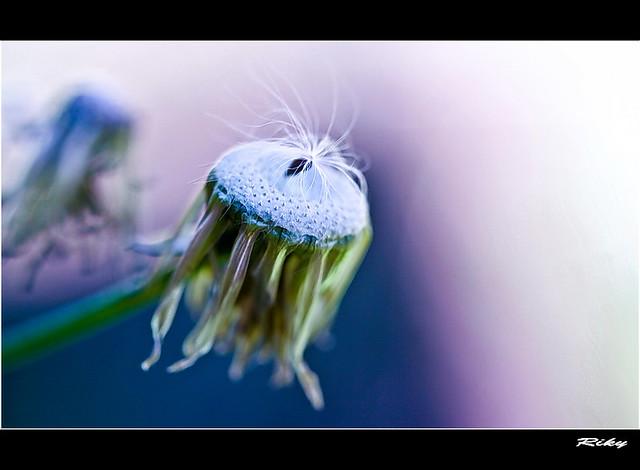 La última semilla - The last seed