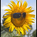 Sunflower looking at the Sun-2& by Sheba_Also 15.6 Million Views