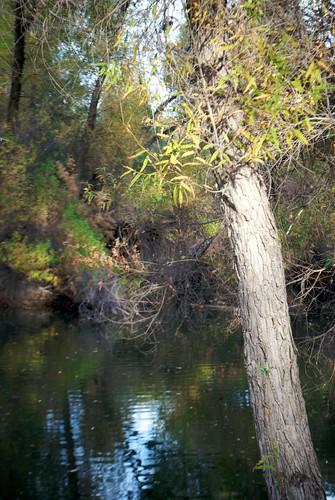 park arizona wickenburg thenatureconservancy wickenburgaz hassayampariverpreserve riverpreserve