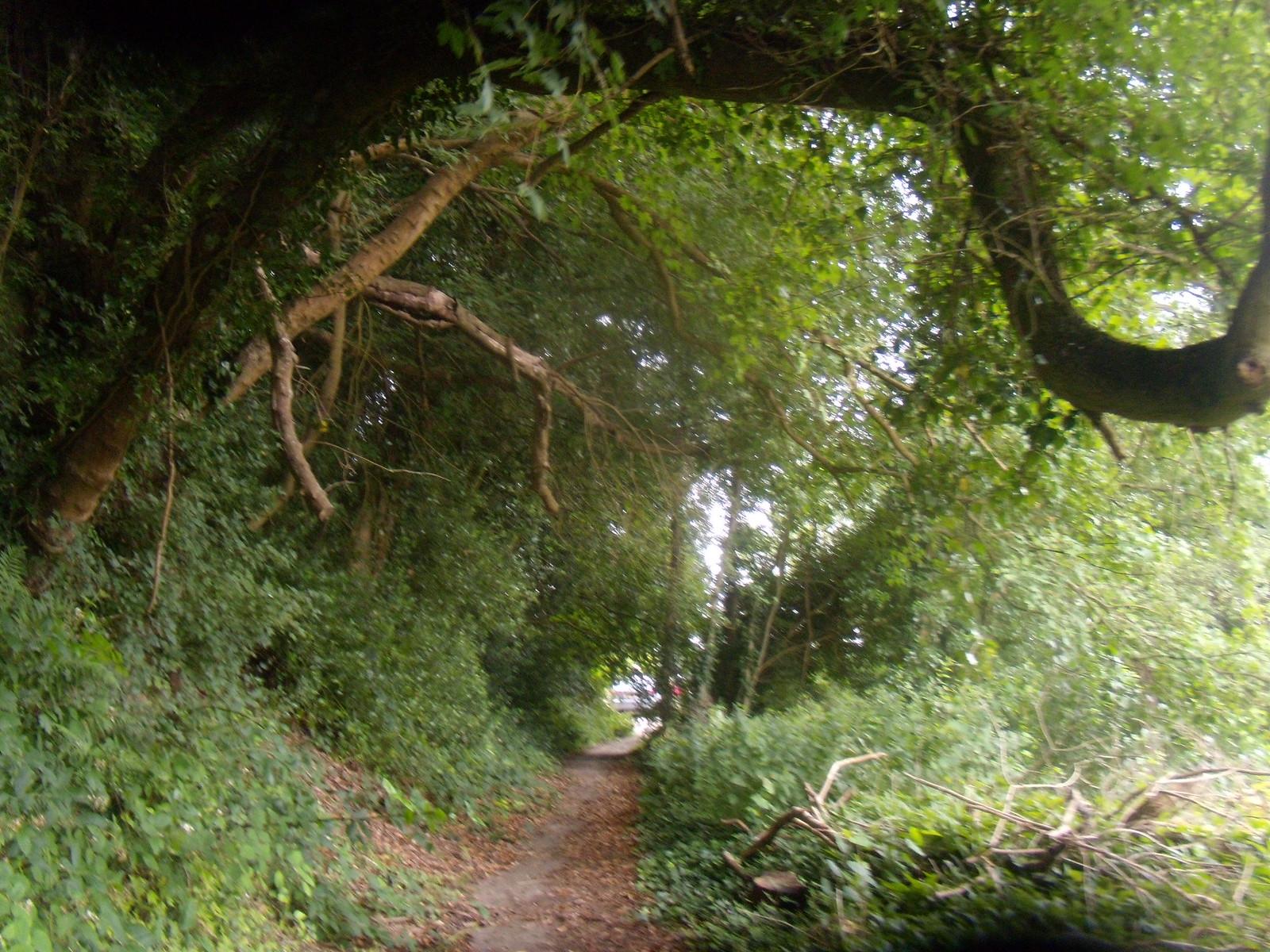 Path scene Ashurst to Hartfield