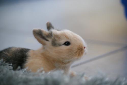 Little Bunnies   by jpockele