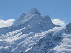 Na druhé straně údolí mají sídlo nejvyšší hory Bernských Alp. Tohle je majestátní Schreckhorn.