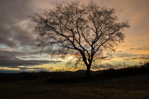 pentax pentaxian pentaxk3 da165028 nolensville nolensvilletn morning sun sunrise winter 2017 january middletennessee middletn rural rsarural rurallife sky beautiful tree landscape life quote