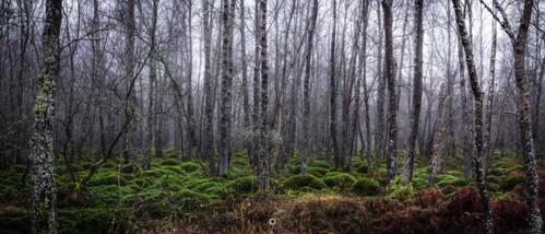 atmosphere canon creepy fog forest landscape leefilters longexposure moss nature panorama perthshire scotland trees winter