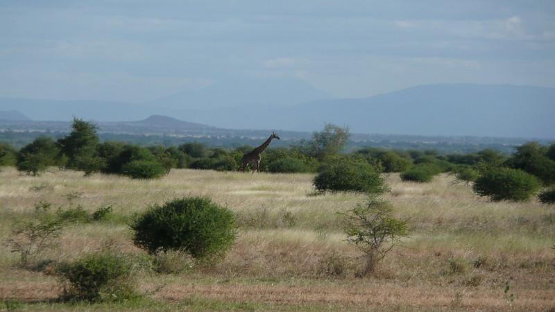 africa 043