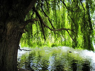 Under the Willow Tree | by Morgaine