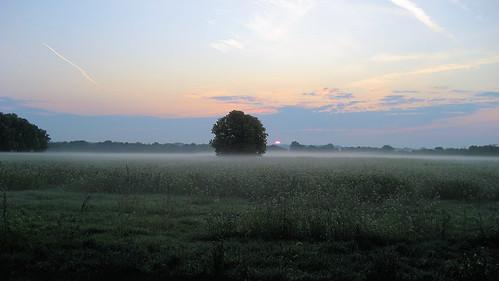 morning mist field fog sunrise day dof